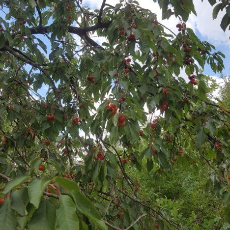 """Fruit van """"De Wilde Wei"""" nu bij Carrefour Alken"""